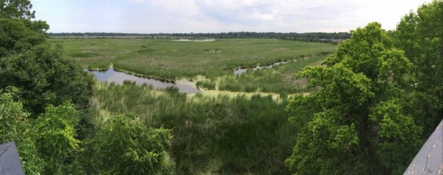 Panorama over the rice fields from the top of the observation tower.