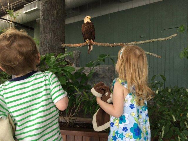 eagles-rays-and-albino-gators-at-the-south-carolina-aquarium-2