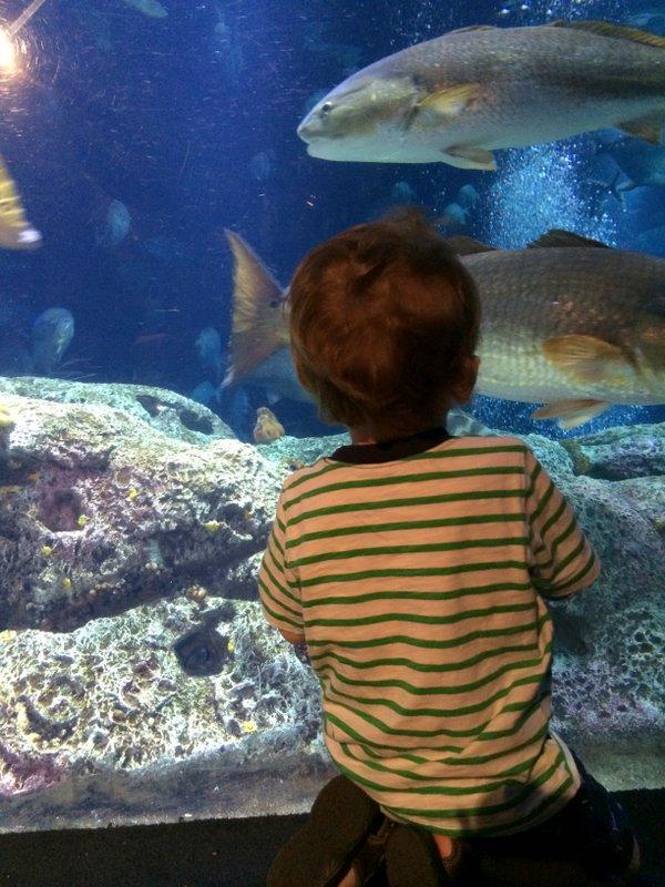 eagles-rays-and-albino-gators-at-the-south-carolina-aquarium-4
